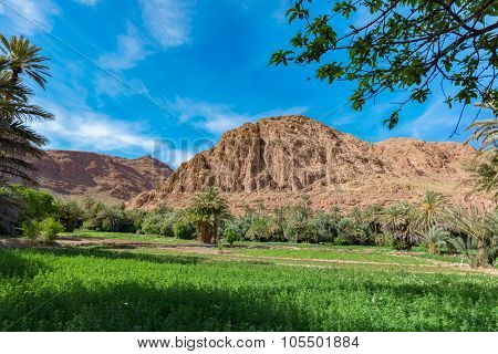Africa, Morocco - Tinghir valley oasis - Land used for agriculture