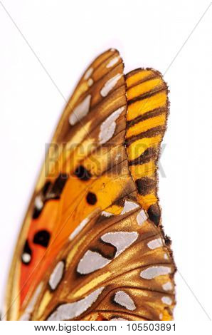 Close up of vanessa cardui, painted lady butterfly isolated over white background