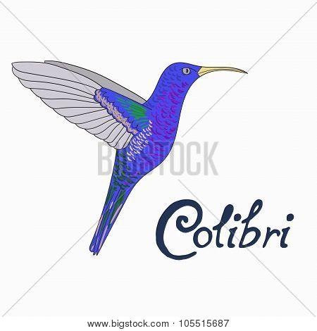 Bird colibri vector illustration