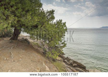 Tripotamos Beach , Chalkidiki, Sithonia, Central Macedonia