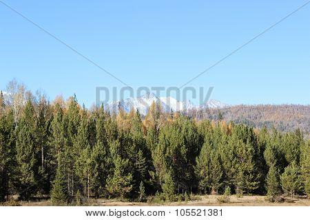 Dense Coniferous Forest.