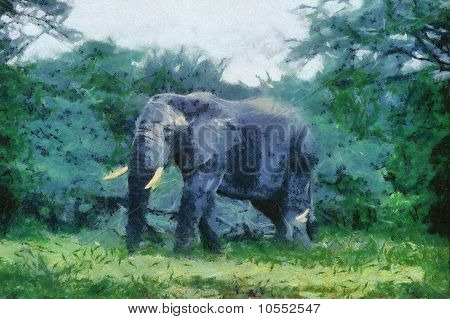 Bush Basher (elephant)