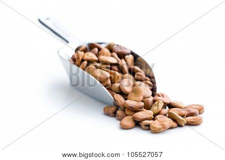 dried broad beans in metal scoop on white background