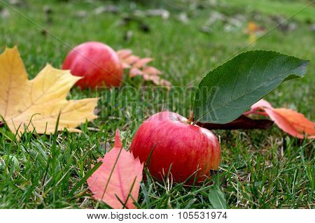 Autumn in the orchard.