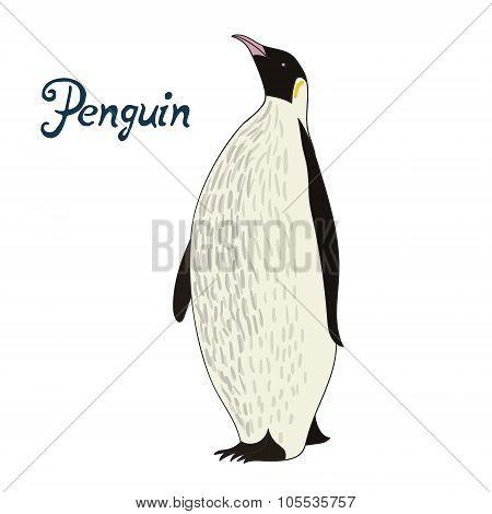 Bird penguin vector illustration