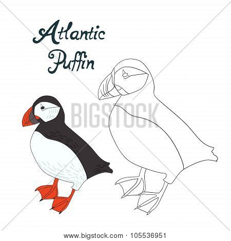 Educational game coloring book puffin bird