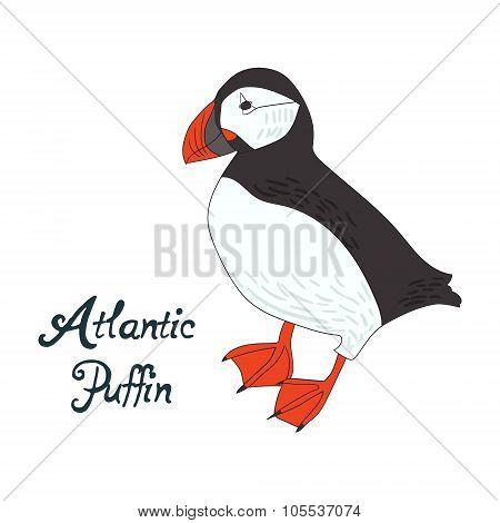 Bird atlantic puffin vector illustration