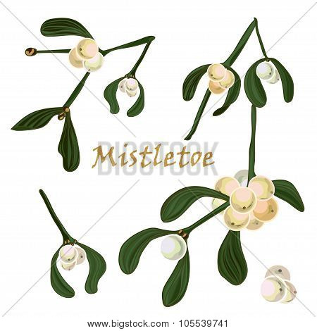 Set Of Christmas Mistletoe Branches