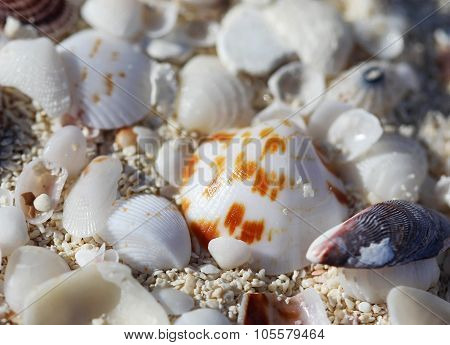 The Big Amount Of Shells Laying In The Sand Macro Shot