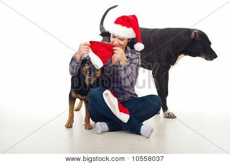Woman Prepare Dogs For Christmas