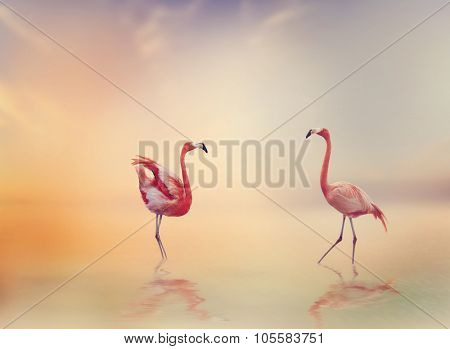 Two Flamingos in The Lake at Sunset