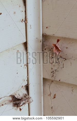 Spider web with leaves and debris in corner of house
