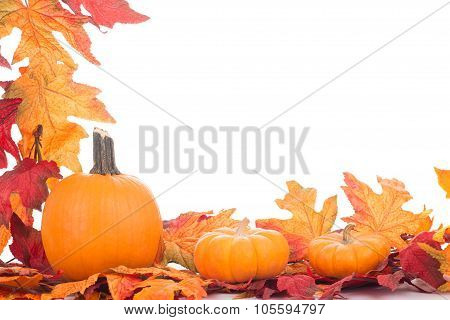Autumn Colorful Decoration