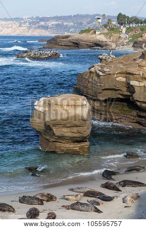 Seals In Children Pool, Point Mencinger, La  Jolla