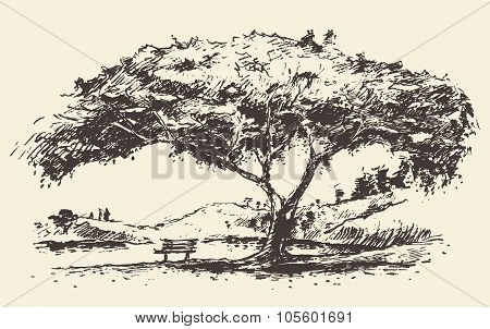 Romantic tree with bench drawn sketch