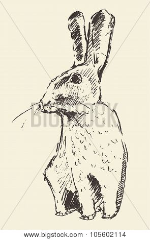 Rabbit, engraving style vintage hand drawn sketch