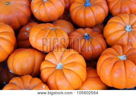 Lots of pumpkins, great for fall background