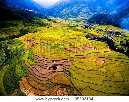 Aerial view of Beautiful terraced rice field in harvest season in Mu Cang Chai, Vietnam.