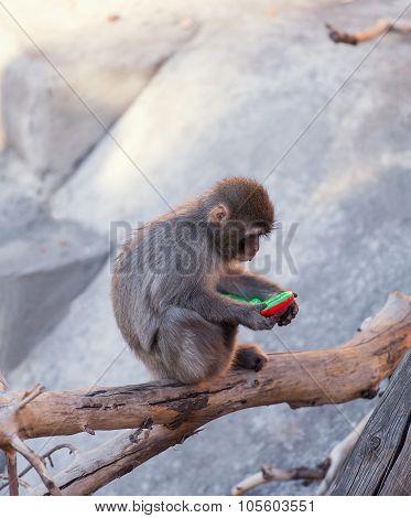 Baby Monkey Zoo