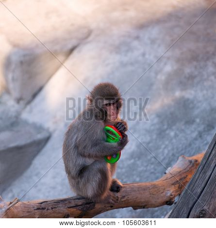 Baby Monkey Sitting On A Tree Branch