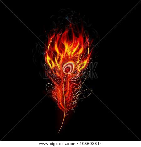 Fire burning peacock feather with black background