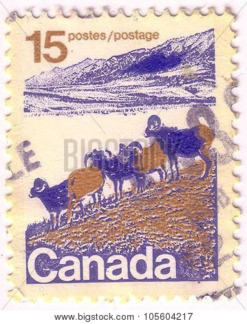 Canada - Circa 1972: A Stamp Printed In Canada Shows American Bighorn Sheep And Rocky Mountains, Wit