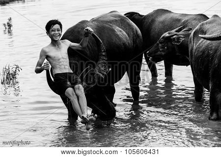DONGTHAP, VIETNAM, OCT 11, 2014: Unidentified boy in rural areas  relaxing on the back of buffalo in floating season in Dongthap, Vietnam. Vietnam called