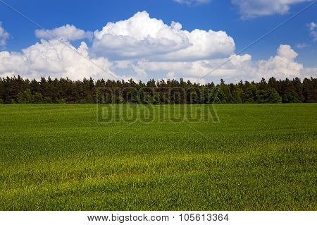 agricultural field.  forest.