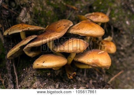 Group Of Mushrooms Together