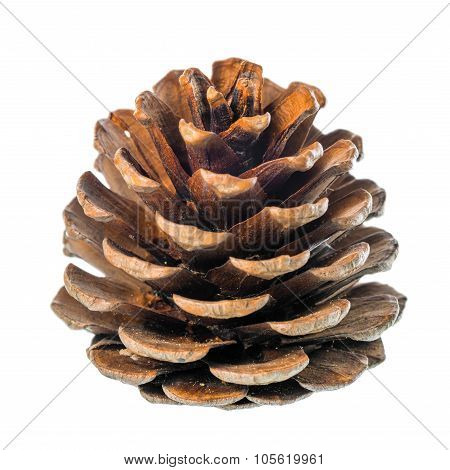 Beautiful Cedar Pine Cone Is Isolated On White Background, Closeup
