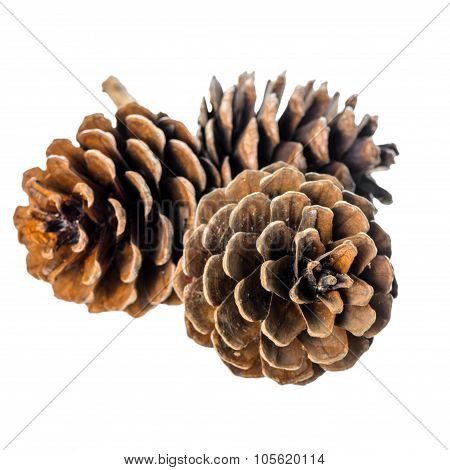 Beautiful Cedar Pine Cones On Twig Is Isolated White Background