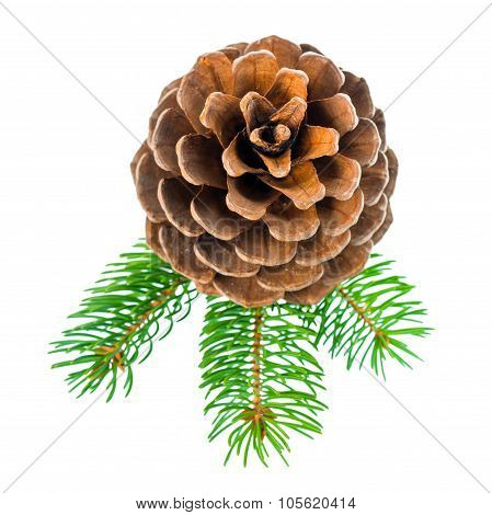 Top Down Of Christmas Decoration Pine Twig With Cedar Cone Is Isolated On White Background, Closeup