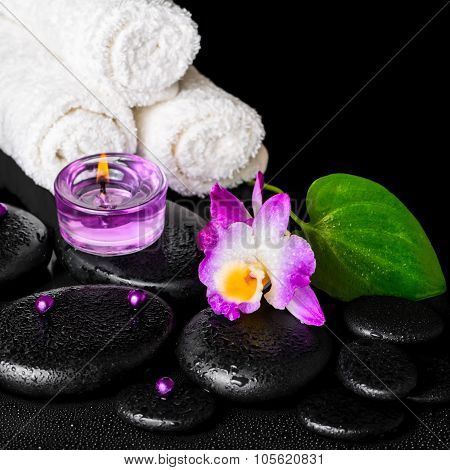 Beautiful Spa Concept Of Purple Orchid Dendrobium With Dew, Black Zen Stone, Green Leaf, Beads, Towe
