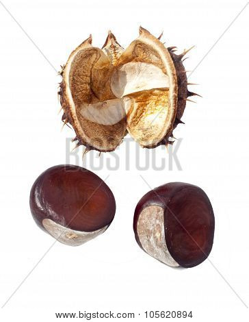 Chestnut Seeds And Shell