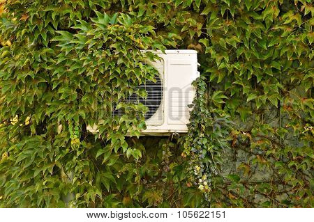 Green Ivy On A Wall With Air Conditioner