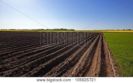 plowed land .  canola.