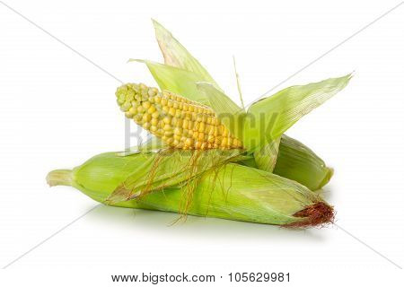 Two fresh corn, isolated on white.