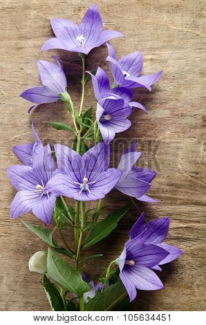 Beautiful Bluebells On Wooden Background