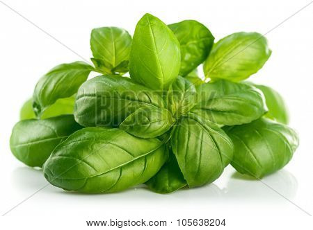 Fresh green leaf basil. Isolated on white background. Illustration