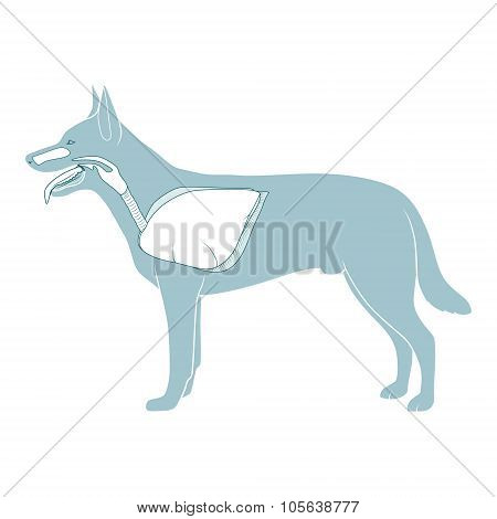 Respiratory system of the dog vector illustration