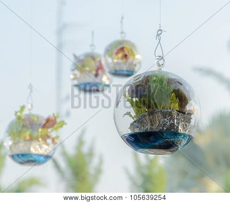 Vegetable Plant Decorate In Sphere Glass