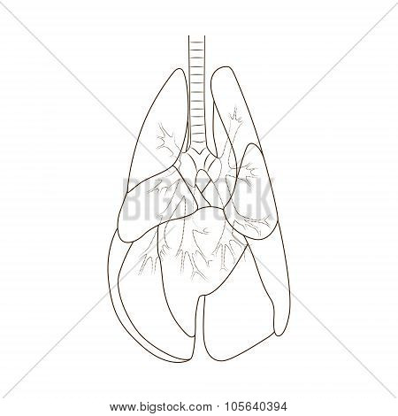 Lungs of the dog vector illustration