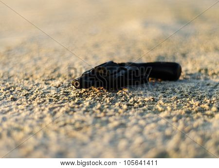 The pistol lying on the sand