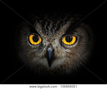 Eyes eagle owl