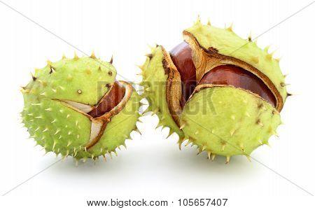Chestnuts In Husk.