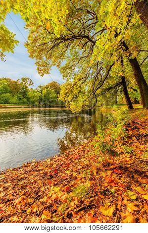 Beautiful Autumn Park On Yelagin Island