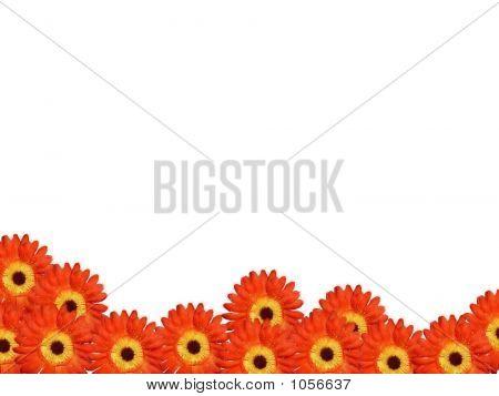 Daisy Flower Arrangement Bottom