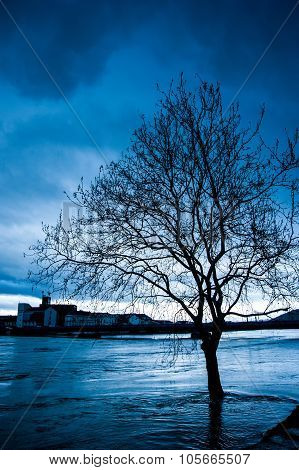 Bare Tree By The River During The Flood In Late Afternoon
