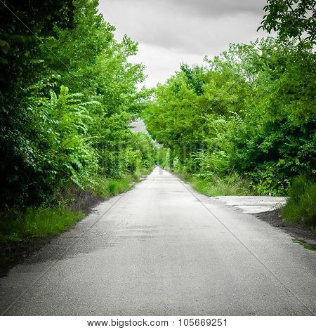 Long Deserted Road In Green Forest