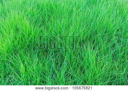 Dark Green Grass Background